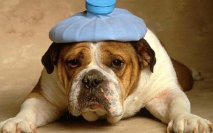Lega per la Difesa del cane, appello al Comune: proibire i botti