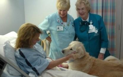 Il paziente ricoverato ha diritto a ricevere la visita del proprio cane