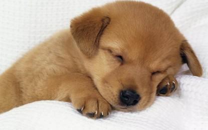 Zampa Gemella: è genovese il social network di incontri per cani