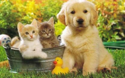 Nuovo redditometro: polemica per l'inserimento delle spese veterinarie