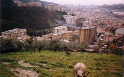 Certosa, area ex Fillea: la riqualificazione deve partire dai diritti delle persone
