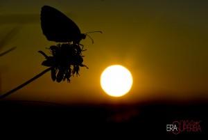 ambiente-sole-energia-natura-D