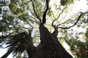 ambiente-green-alberi-verde-parchi-natura-DI