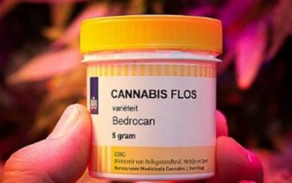 Cannabis terapeutica: informazione e formazione per abbattere l'ignoranza