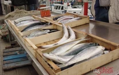 """Il mestiere del pescatore a Genova e in Liguria, il """"giro del pesce"""" dal mare alla nostra tavola"""