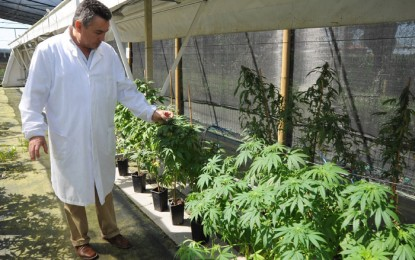 Liguria, cannabis terapeutica: la proposta di legge arriva in consiglio regionale