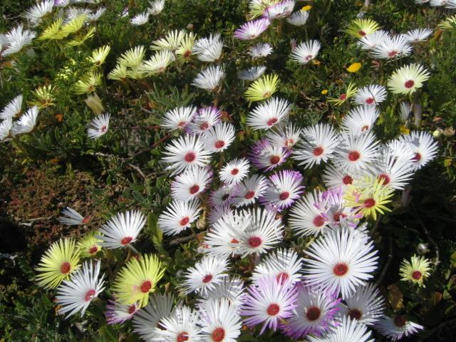 L erba persa mostra mercato dedicata a piante fiori for Piante grasse ornamentali