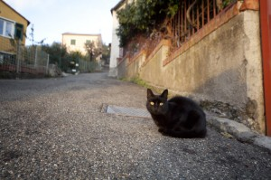 Gatto in campagna