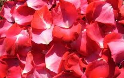Liquore di rosa: ingredienti e preparazione