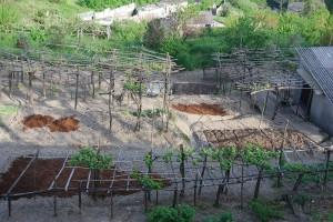 orto-orti-urbani-agricoltura-coltivare