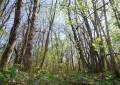 """Tiziano Fratus, il """"cercatore di alberi"""". La nostra intervista allo scrittore: «Prima di tutto, il mio orto…»"""