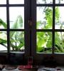 Trasformare il davanzale in uno spazio verde, consigli per la coltivazione in piccole cassette
