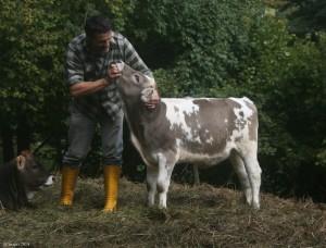 mucca-cabannina (1)