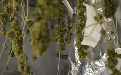 Cannabis terapeutica, incontro con malati e produttori genovesi: le immagini e le testimonianze
