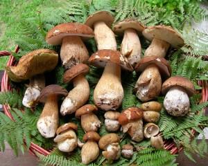 Mostra del fungo e sagra della ballotta, 30esima edizione