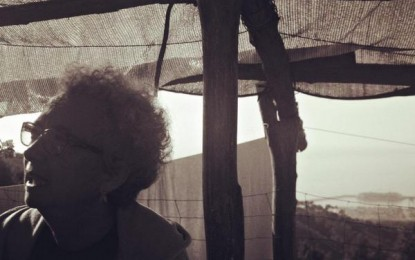 #Vitefuoriporta, il mestiere dell'apicoltore: dal miele alla propoli sulle alture di Prà