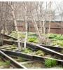 La High Line di New York: un parco di piante spontanee, sospeso tra i grattacieli