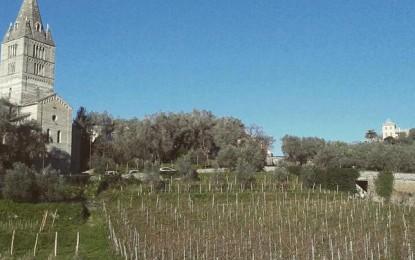 Produrre vino in Liguria, la professione del viticoltore: la nostra visita a Cogorno