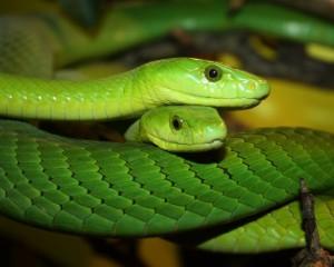 Snakes, una mostra dedicata al magnifico mondo dei serpenti