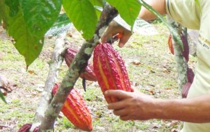 Otto Chocolates, dal Perù alla Liguria: il cioccolato biologico made in Zena