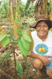 otto-chocolates-piantagione-cacao-crescta-picota