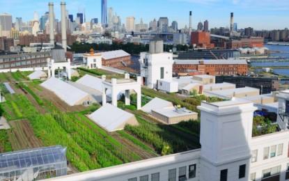 Brooklyn Grange Farms: produzioni di ortaggi e miele sui tetti di New York