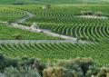 Il  vigneto-giardino di Amastuola in Puglia: una vera opera d'arte