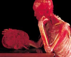 Body Worlds, la mostra del corpo umano al Porto Antico