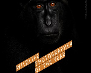 La mostra Wildlife Photographer of the Year a Genova