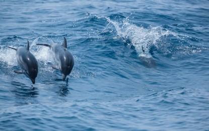 Whale whatching, l'avvistamento dei cetacei nel Santuario del Mar Ligure