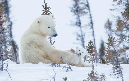 """Mostra fotografica """"Il signore dell'Artico"""""""