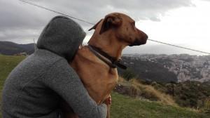 animali-domestici-cani