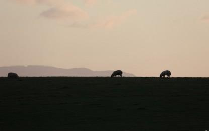 Un viaggio nel Ulster dei pastori e dei pescatori. L'irresistibile richiamo del viaggiare